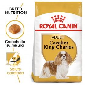 Royal Canin Cavalier King Charles 27