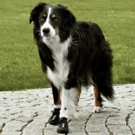 Botas para perros Walker Active