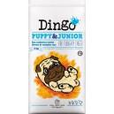 Dingo Puppy & Junior