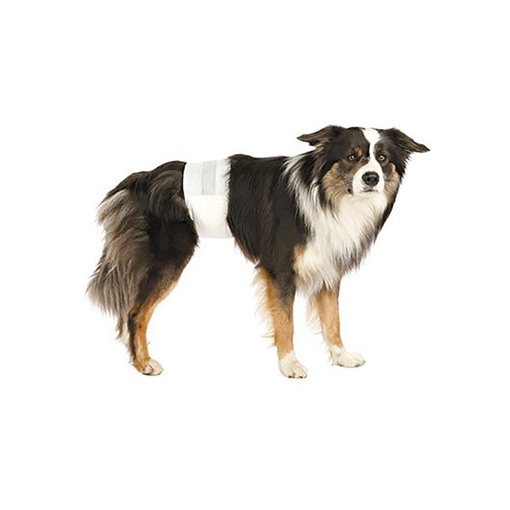 Pañales para perro, higiene para tu mascota